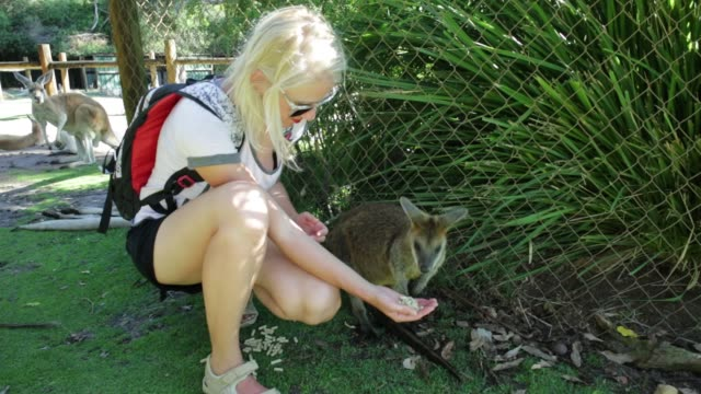 wallaby eating from hand video