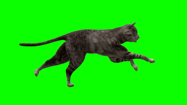 Wallking Cat Green Screen (Loopable) video