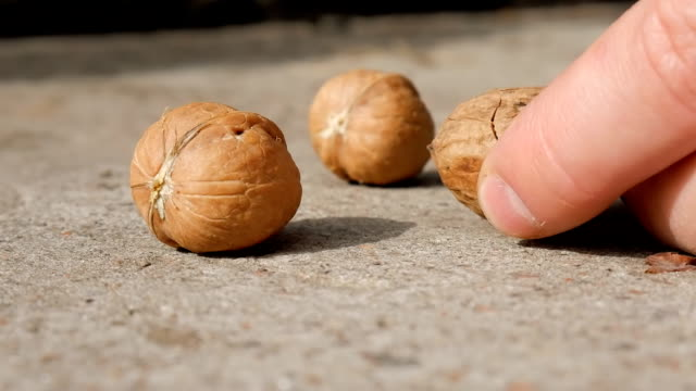 Walnut cracking with a hammer, hands. Cracking A Walnut With Hammer. video