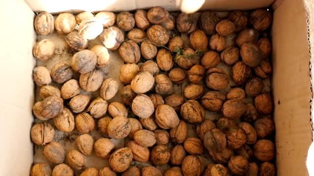 Walnuts falling in slow motion video