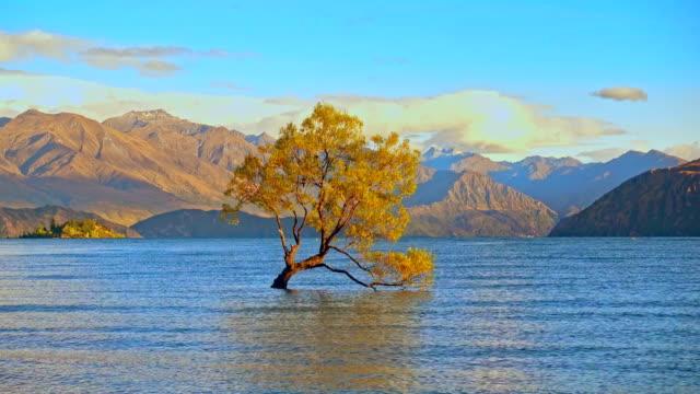 Wanaka Tree, Lake Wanaka at sunrise, New Zealand video