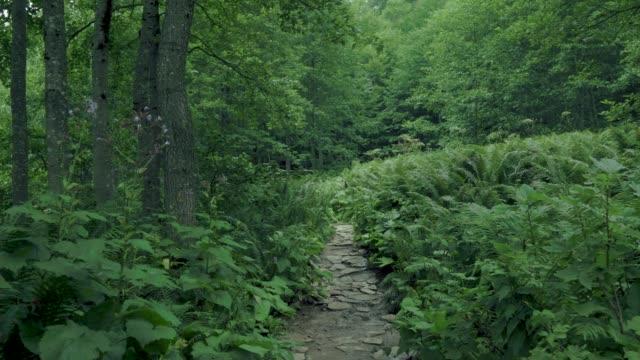Wander through the foggy green forest