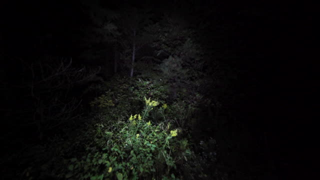Wandering lost through the woods at night. Lost in the dark with only flashlight to light the way in scary forest on Halloween. Escaping in the bushes in the dead of night. flashlight stock videos & royalty-free footage