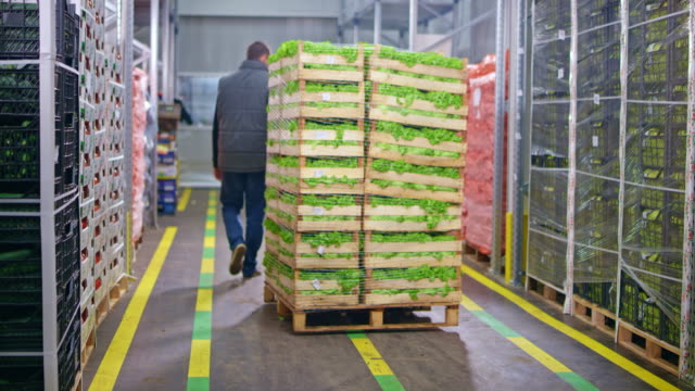 ds warehouse employee using a pallet jack to take away stacked crates of fresh lettuce - cibi e bevande video stock e b–roll