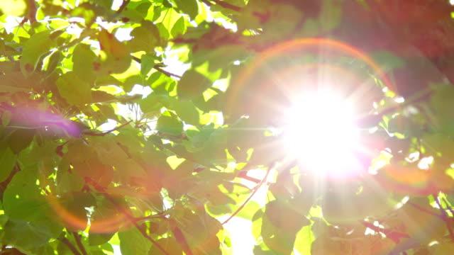 暖かい春のスローモーションをクローズ アップ: 過去の緑輝く太陽の樹冠葉します。 - 木漏れ日点の映像素材/bロール