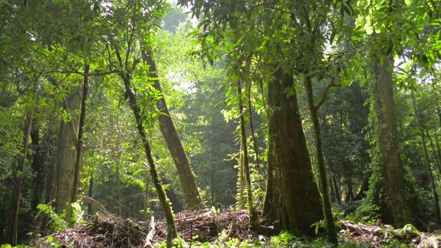 熱帯雨林の木々の幹を照す暖かい日差し。ジャングルの夏の朝の静けさ。 - 雨林点の映像素材/bロール