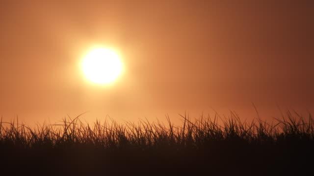 warm sunny sky with blowing grasses - podświetlony filmów i materiałów b-roll