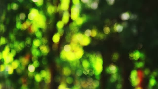 warm yellow and green color tone blurred bokeh nature landscape background of a view with sunflare and bokeh lights. blurry natural greenery bokeh - bokeh stock videos & royalty-free footage
