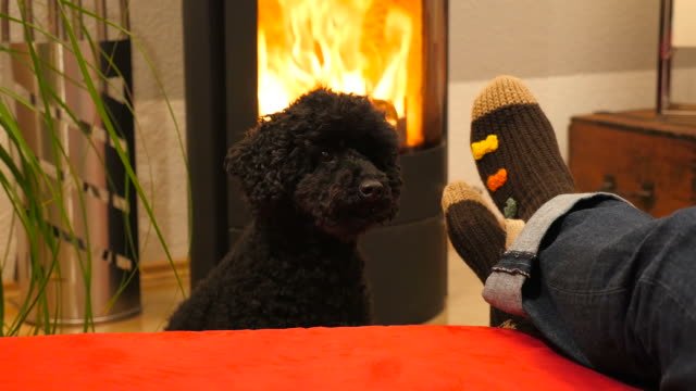 värmande fötter vid spisen, med hund - strumpa bildbanksvideor och videomaterial från bakom kulisserna