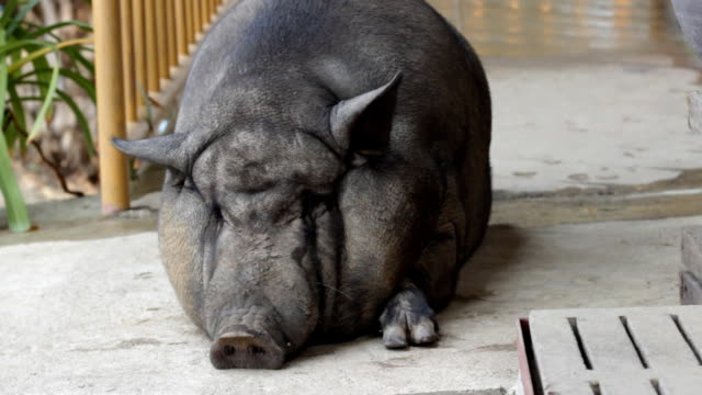 warthog sitting on the floor