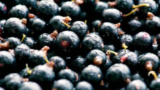 washed blackcurrant berries video