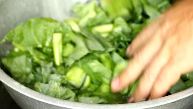 washing  chinese kale - lattuga video stock e b–roll