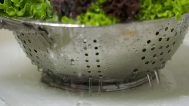 Washing curly red and green leaf lettuce in colander under running water video