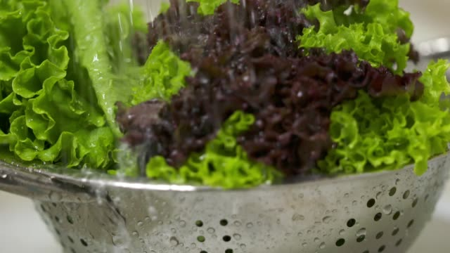 Washing curly red and green leaf lettuce under running water in slow motion video