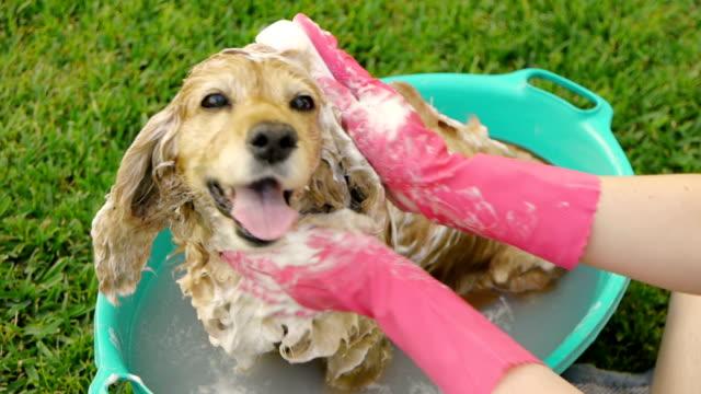Waschen Hund Ohr und Kopf (HD – Video