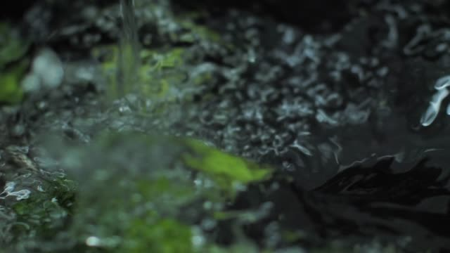Washing fresh broccoli slow motion video - vídeo