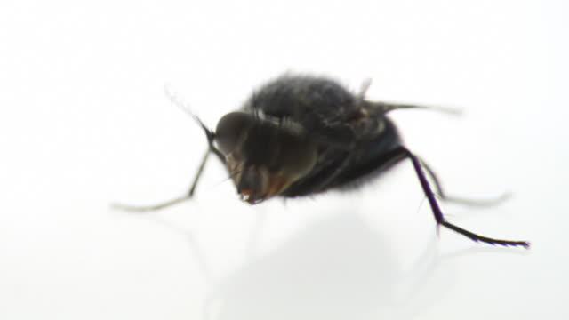 washing housefly - sinek stok videoları ve detay görüntü çekimi