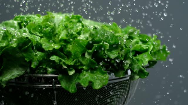 Washing lettuce, Slow Motion video