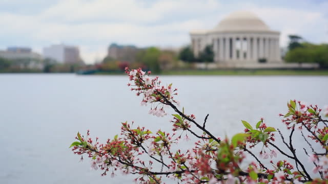 Washington DC - Tidal Basin and Jefferson Memorial