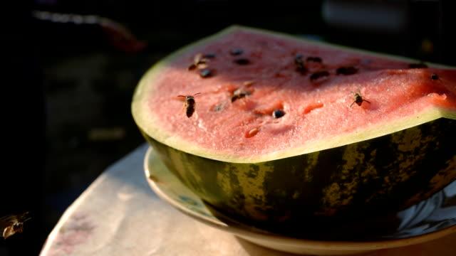 wespe essen saftig rot frisch gehackte wassermelone - wespe stock-videos und b-roll-filmmaterial
