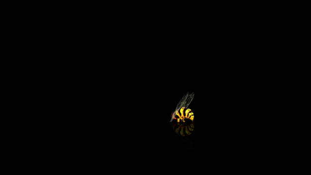 Wasp flying and digging, with alpha mask video