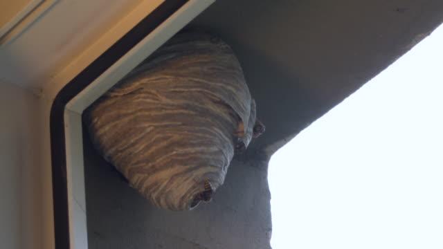 wesp-bienenstock hängt am fenster in einem städtischen gebiet. wilder bienenstock draußen auf dem gebäude. niemand - wespe stock-videos und b-roll-filmmaterial