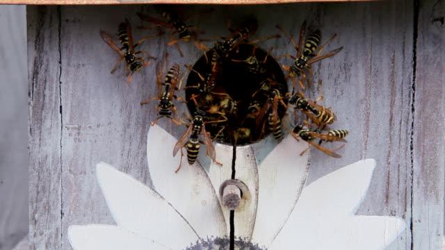 Wasp Nest Inside Bird Feeder video