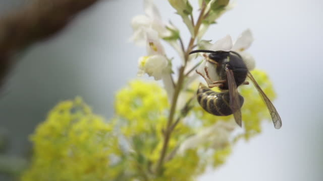 SLOW MOTION: Wasp Slow motion shot of a wasp. 笹 stock videos & royalty-free footage