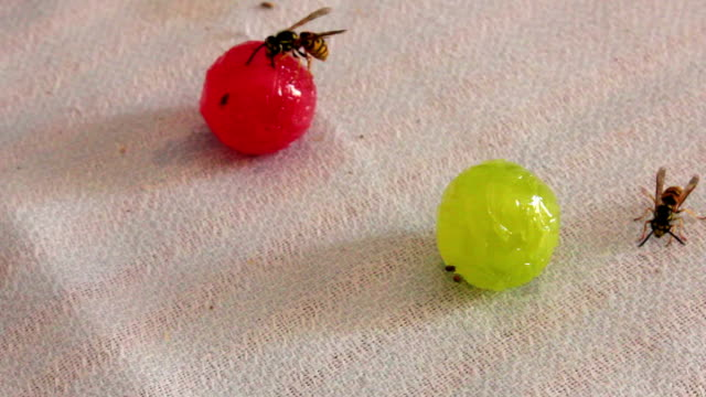 Wasps are sitting on candies Wasps are sitting at round multi-colored candy,Full HD 1920 x 1080, 25 fps. HD stock footage leftovers stock videos & royalty-free footage