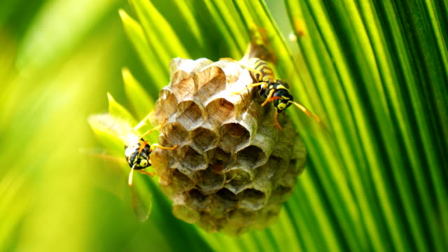 строя гнездо осы - жакет стоковые видео и кадры b-roll
