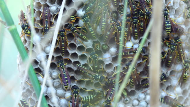 stockvideo's en b-roll-footage met wespen component in het gras - venkel