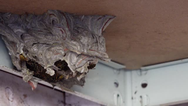wasp's nest - жакет стоковые видео и кадры b-roll