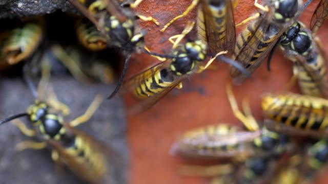 wespen auf eine mauer - wespe stock-videos und b-roll-filmmaterial