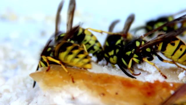 wasps - жакет стоковые видео и кадры b-roll