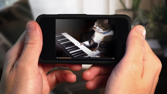 watching funny keyboard playing cat on smartphone - tiktok стоковые видео и кадры b-roll