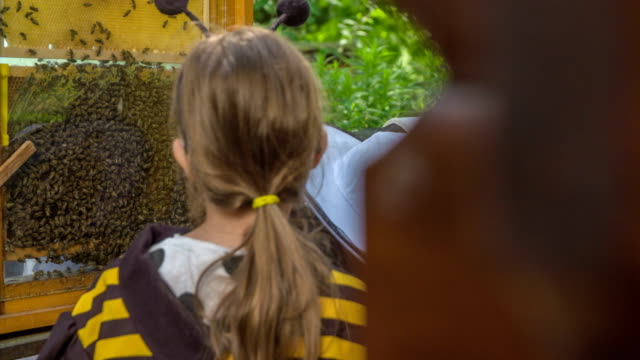 watching the bees - viaggio d'istruzione video stock e b–roll