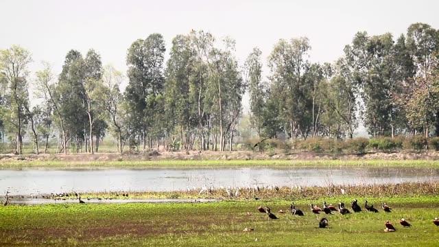 water birds in bardia national park, nepal - park narodowy kanha filmów i materiałów b-roll