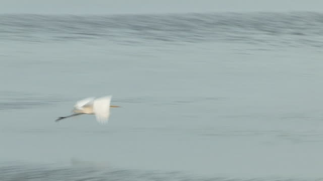 stockvideo's en b-roll-footage met water birds in the ocean 6 - hd 60i - minder dan 10 seconden