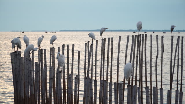 Water birds resting over the sticks on the sea