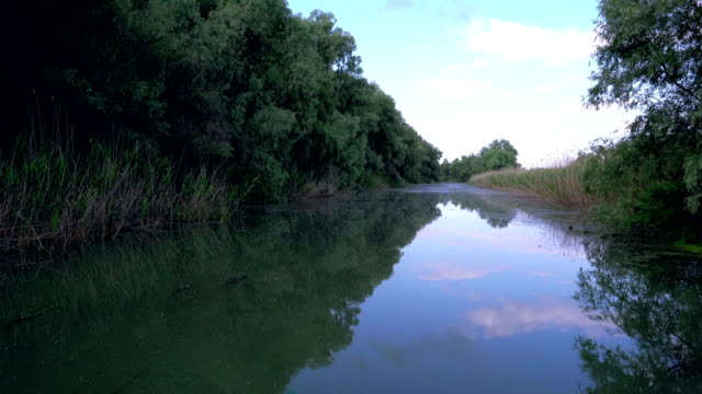 Water channel, river in Danube Delta video