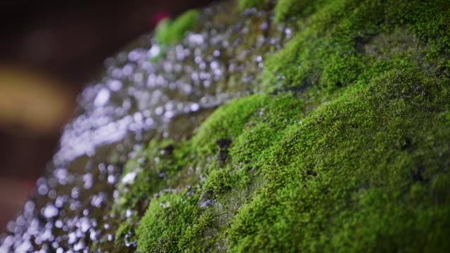 vatten droppande på den gröna mossan på berget efter regn, natur bakgrunds koncept - torv bildbanksvideor och videomaterial från bakom kulisserna