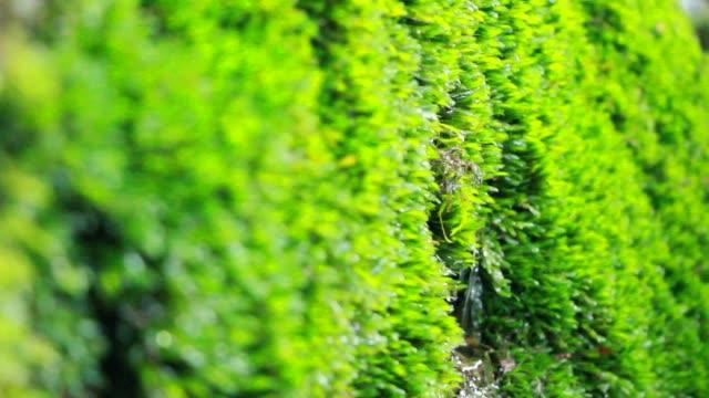 Water drips from moist moss moist moss moss stock videos & royalty-free footage