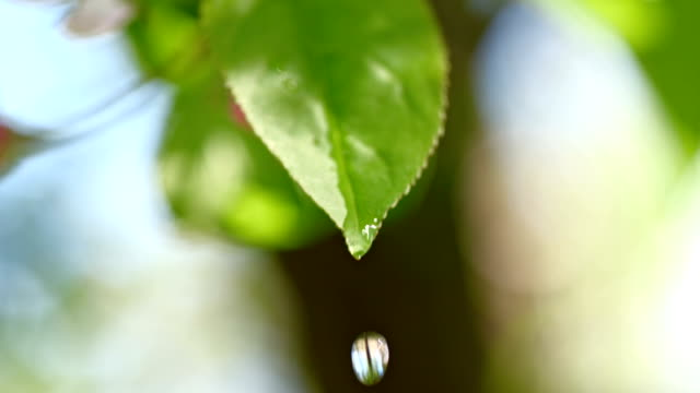 slo mo 水ドロップなどの葉の - 水滴点の映像素材/bロール