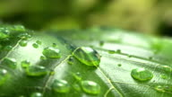 istock Water Drop Flows Down on a Leaf 962118308