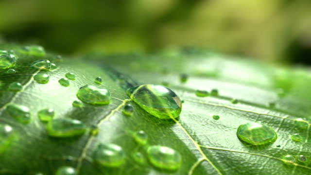 Water Drop Flows Down on a Leaf Water Drop Flows Down on a Leaf, Beautiful realistic 3d animation. 4K drop stock videos & royalty-free footage