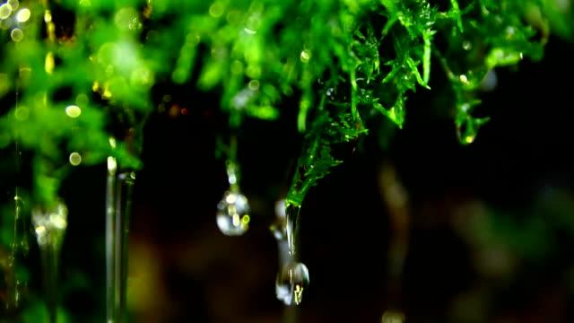 water drop on green moss - muschio flora video stock e b–roll