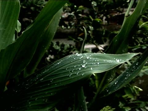 acqua goccia  - parte della pianta video stock e b–roll