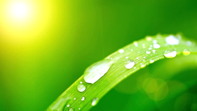 Water droplets on blade of grass with sun light video