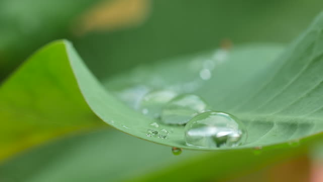 water droplets on the leaf video