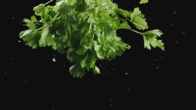gocce d'acqua che cadono da un mucchio di sedano e prezzemolo su sfondo nero - sedano video stock e b–roll